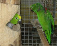 Nina (links) und Robin