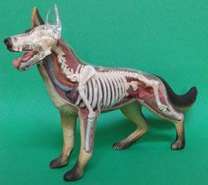 イヌ(犬)の模型