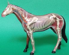 ウマ(馬)の模型