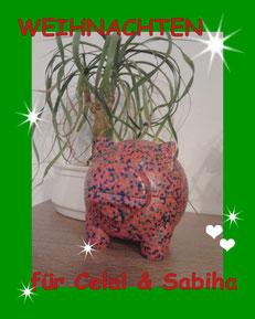 TESSA e.V. Spk. Marburg / Biedenkopf Ktnr.: 11009891 Blz.: 53350000 IBAN: DE525335000000011 Verwendungszweck bitte: Weihnachtsaktion Celal