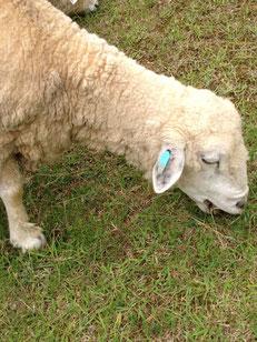 羊羊ー!!!!