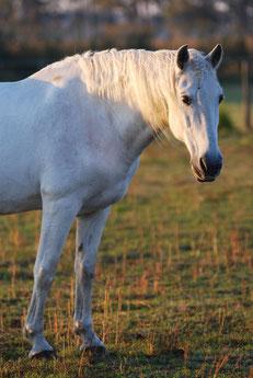 Pferdepension Pensionspferd Pferdestall Robusthaltung Pferde Brandenburg Berlin Pferdeweiden Gruppenhaltung Heu ad libitum