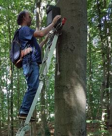 Hartmut Rudolphi beim Aufhängen eines neuen Fledermauskastens - Foto: NABU/F. Pliquett