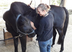 Laserbehandlung beim Pferd