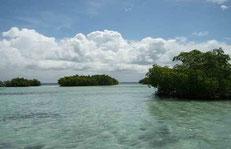mangrove lagon