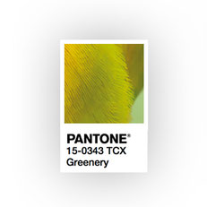 vignette Pantone logo miméthik
