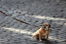 Zusammenleben mit Hund