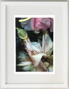 Bellezza dello sfiorire, 2020, stampa serigrafica, 20 x 30 (1/5)