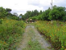 作業小屋も建ち、養蜂植物のピッコンやユーカリが育ち、緑豊かになりました。
