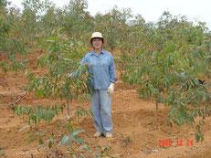 ユーカリを植林して1年目。まだまだ背が低かった。