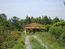 養蜂園の入口から作業小屋までの道もすっかり緑豊かになりました。