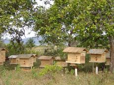 2004年当時の巣箱。種蜂の入った1段しからない巣箱が、2段、3段と成長していきました。