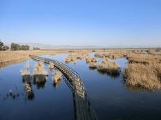 Marisma del Parque Natural del Fondo, Alicante, Comunidad Valenciana.