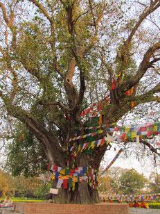 der berühmte Baum