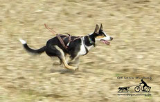 Ayla im Sprint