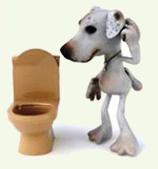 джек рассел терьер приучить к туалет