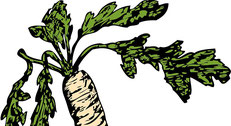 Scharfstoffe Verdauungsdrüsen, Darmbewegung Durchblutung Schleimhäute Atemwege Harnwege antimikrobiell antibakteriell antiviral