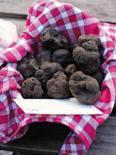 Panier de truffes noire de Lalbenque