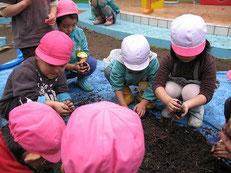 「タネダンゴ」を作る子どもたち