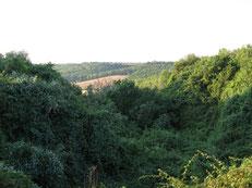 cea calanchi montalbano basilicata bosco andriace