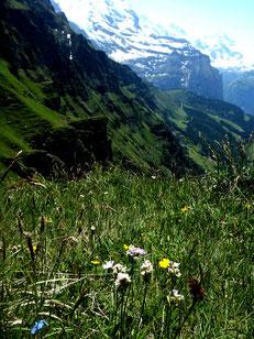 Wengen- Jungfrau