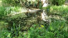 Jardin naturel (20ème)