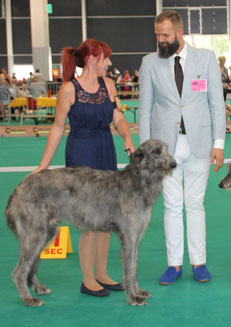 Deerhounds at Kennel von Alshamina..., CACIB Liège 2018 Deerhounds..., SCOTTISH  DEERHOUND  BREEDER  GERMANY..., we breed with heart and passion Borzois and Scottish Deerhounds!