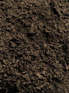 Paulownia Bodenvorbereitung