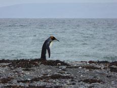 Finally: das Pinguin-O-Meter erreicht die 1m-Marke