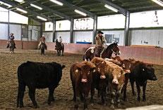 Cowboys und Cattle, Ranch, Western,