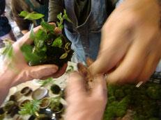 陶器と植物の傑作 苔玉作り