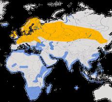 Karte zur Verbreitung des Großen Brachvogels (Numenius arquata)