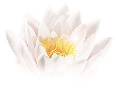 Seerose, Lotusblüte, innerer Frieden, Lebenskraft, Selbstliebe