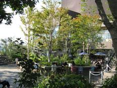 原宿東急ビルの屋上庭園