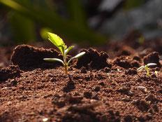 3匹の熊 Mabel AmberによるPixabayからの画像