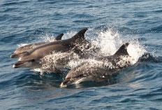 Walbeobachtungen in Tarifa, Spanien