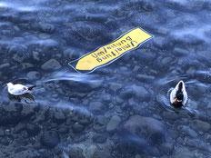 """gelbes Verkehrsschild """"Umleitung"""" im flachen Wasser mit 2 Enten"""