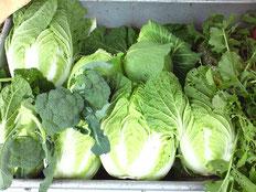 白菜などの新鮮野菜