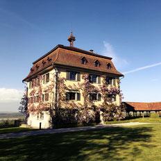 Das Schloss Wolfsberg in Ermatingen ist komplett mit Blauregen eingewachsen. Von hier hat man einen schoenen Blick auf den Bodensee.