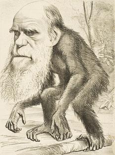 Darwin-Karrikatur