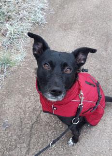 Schwarzer Hund mit rotem Mäntelchen