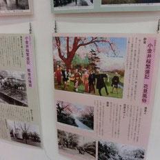 写真のほかにも昔ののどかなお花見風俗のパネル展示も