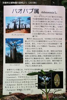 バオバブの説明(京都府立植物園)
