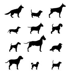 Zwart-wit honden in profiel