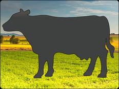 Rinder-Shop Status | Rind 38