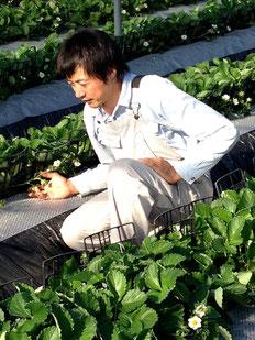 「農薬ゼロのだいしん農園」 楠田大伸