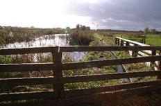 Aus dem Pumpenteich wird die höher gelegene Teichkette gespeist. Foto: Bockwinkel