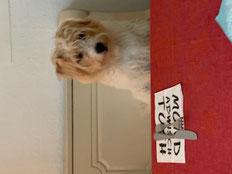 Immer mit dabei: Therapiehund Osca
