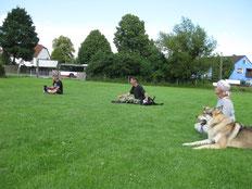 Die Menschen sitzen mit ihren Hunden im Gras und streicheln sie in den Schlaf