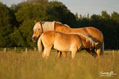 Pferde Idylle im Ponypark Padenstedt